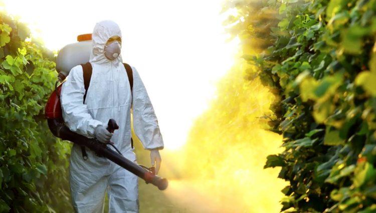 Pestisit Nedir | Pestisit ölümcül müdür?